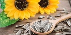 Tarihi Eminonu - Sunflower Seed - Plain